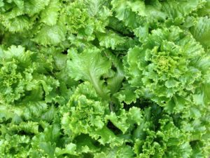 génération salade ou génération Z